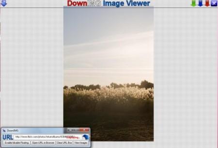 Image downloader download images free DownIMG