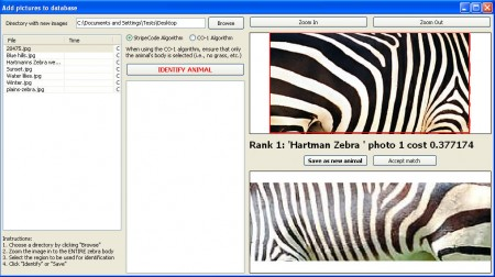 StripeSpotter zebra identified
