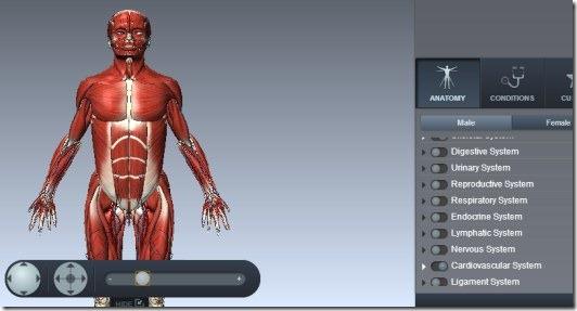 BioDigital Human 002