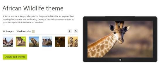 african wildlife theme