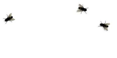 insects on desktop graphics