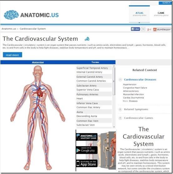 Anatomicus - Human Anatomy Atlas