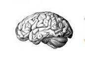 improve memory-icon