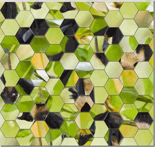 HexSaw-Zoo-Home.jpg