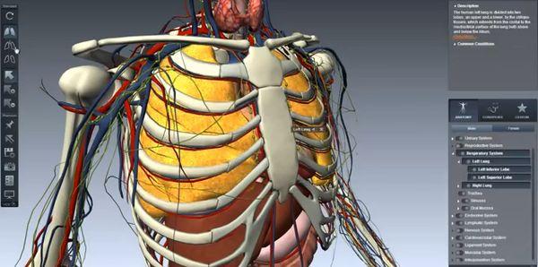 chrome human anatomy extensions-2