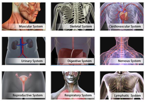 chrome human anatomy extensions-3