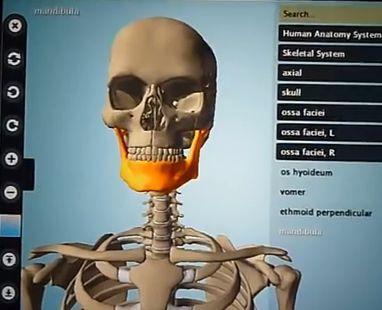chrome human anatomy extensions