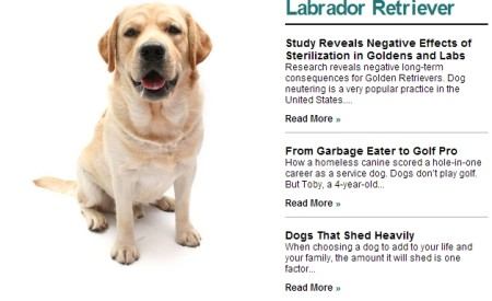 learn about dog breeds