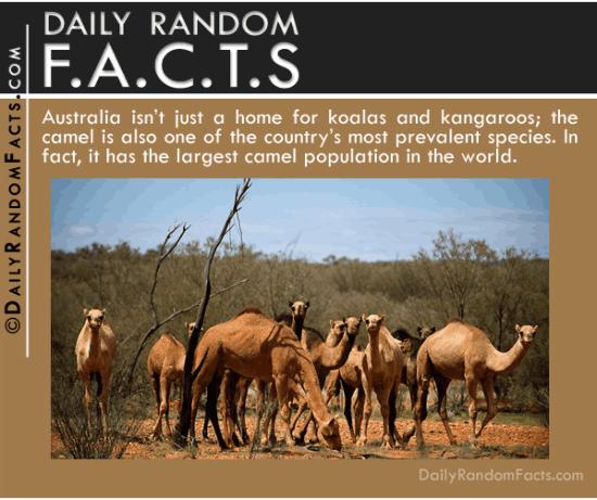 Daily Random Facts