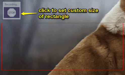 set custom size of screen capturing rectangle