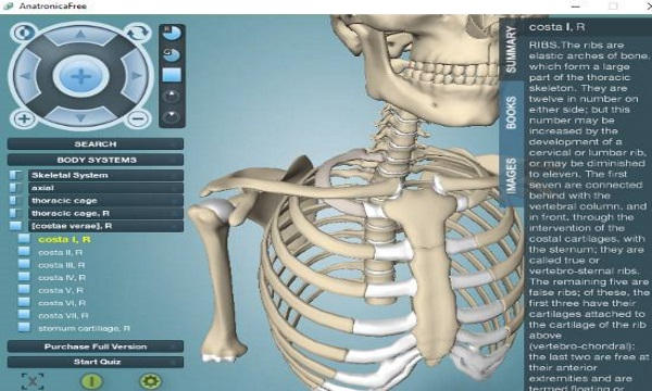 Free 3d Human Anatomy Software To Learn Skeletal System