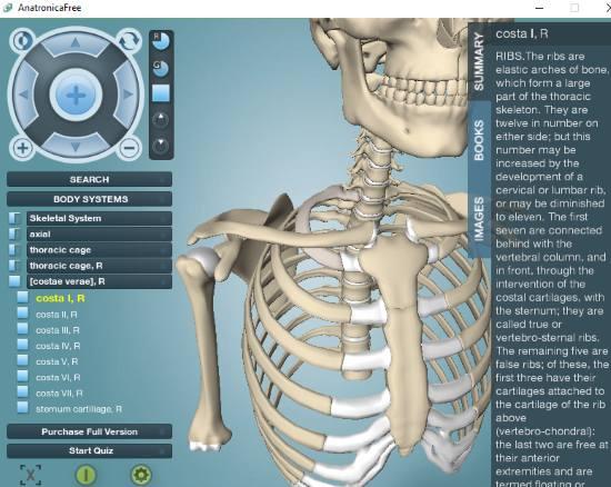 3d human anatomy software