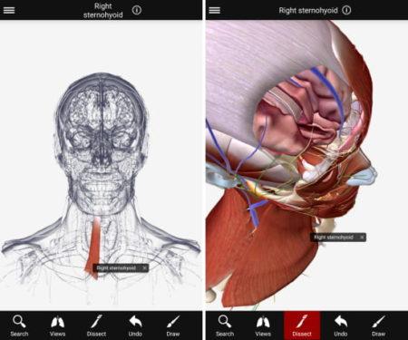 BioDigital 3D human anatomy