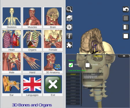 3D Bones and Organs (Anatomy)
