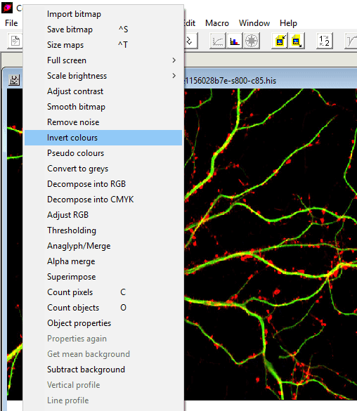 Bitmap options in Cells&Maps