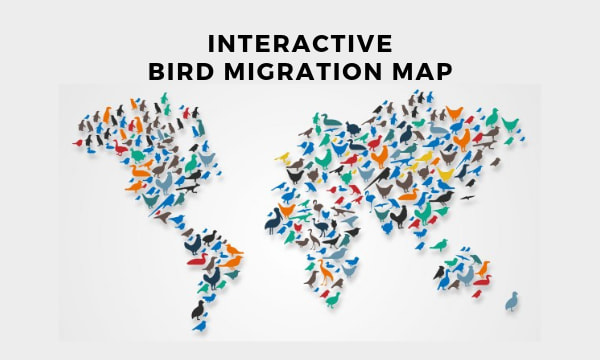 Interactive Bird Migration Map to Track Migratory Birds, Seasons
