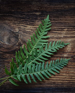 online plants database websites free