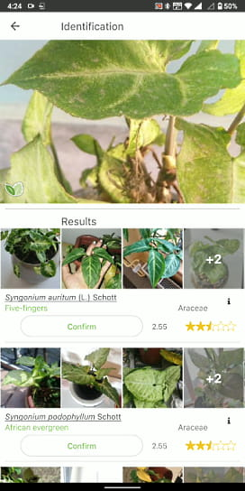 plant identication