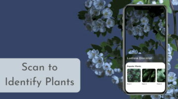 Identify Plants by Scanning using this Fee App