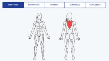 Find Exercise to Workout for Different Body Parts