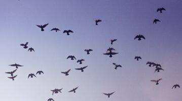 Shazam for Bird Sounds: Free app to Identify Birds from their Sound